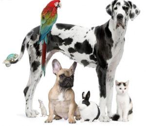Garder animaux